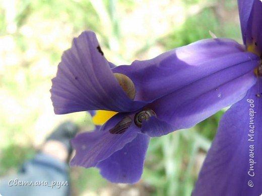 Полюбуйтесь кактусами. Многие из них сейчас цветут. фото 57