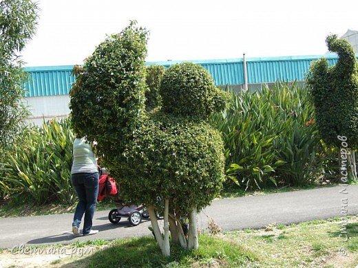 Полюбуйтесь кактусами. Многие из них сейчас цветут. фото 35