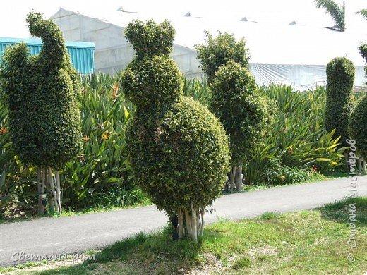 Полюбуйтесь кактусами. Многие из них сейчас цветут. фото 36
