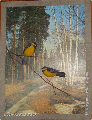 Птицы фото 2