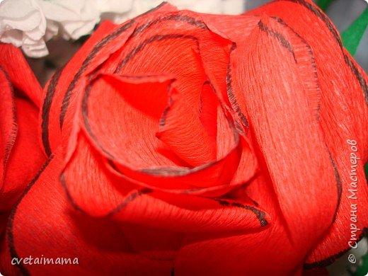 розы из гофрированной бумаги фото 3