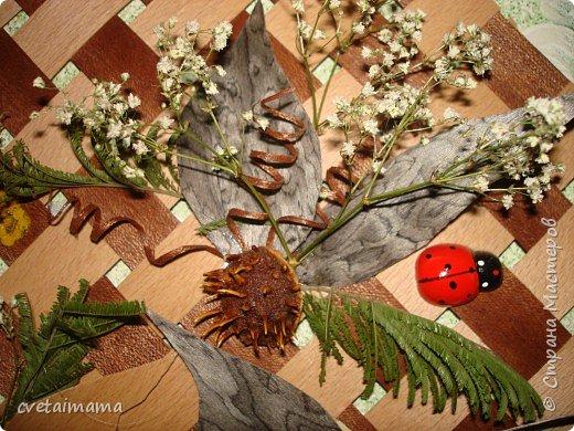 панно из шпона и сухоцветов. фото 4