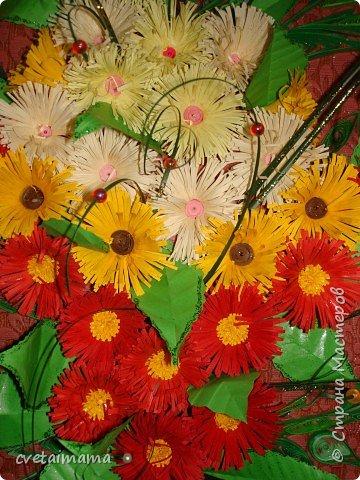 летние цветы фото 2