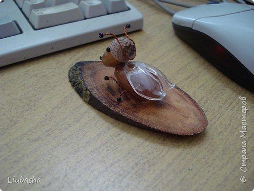 жучок