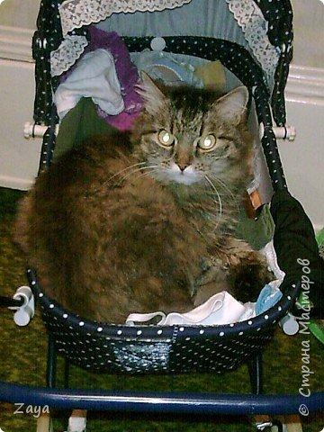 Мой кот в дет.игруш.коляске Тимка фото 1