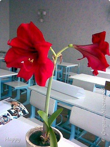 настоящие цветы фото 2