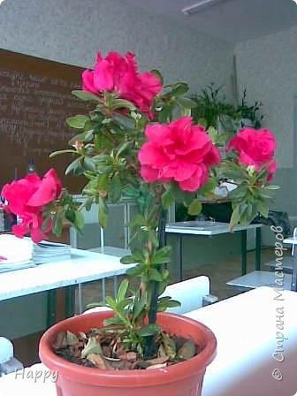 настоящие цветы фото 1