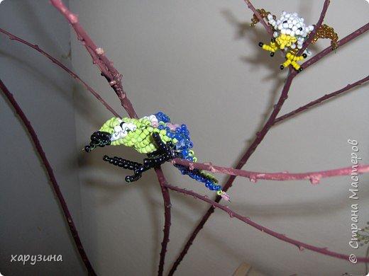 Попугайчики фото 2