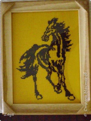 черный конь на желтой конве выглядит неплохо