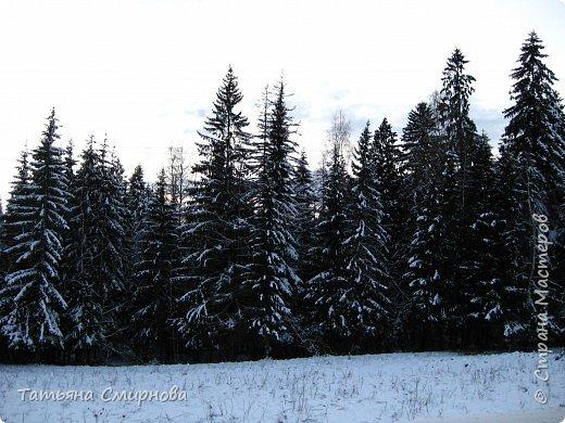 Из мест заповедных... (следы на снегу) продолжение