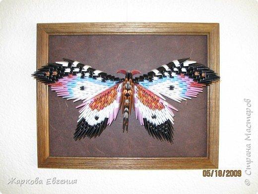 Оригами модульное: Бабочка фото 2