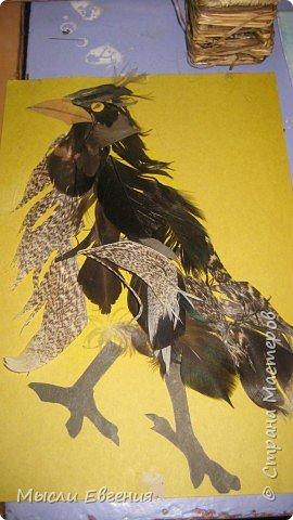 день птиц фото 10