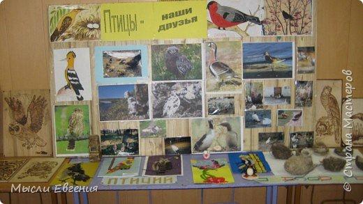 день птиц фото 1