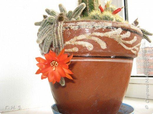 Мои кактусики.