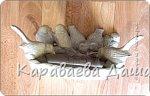Кормушки для птиц. фото 1