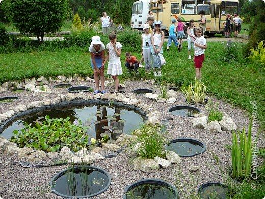 С детьми летнего школьного лагеря ездили на экскурсию в наш Ботанический сад.Там сейчас цветут рододендроны.Хочется поделиться с вами этой красотой. фото 1