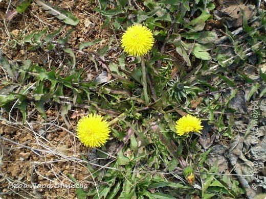 Весна,  Весна на улице! фото 2