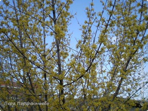 Весна,  Весна на улице! фото 3