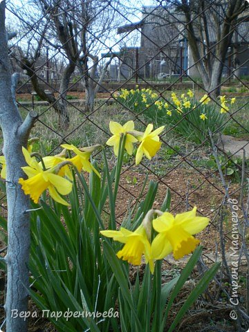 Весна,  Весна на улице! фото 6