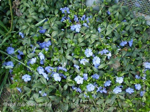 Весна,  Весна на улице! фото 7