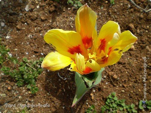 Весна,  Весна на улице! фото 12