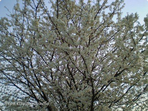 Весна,  Весна на улице! фото 1