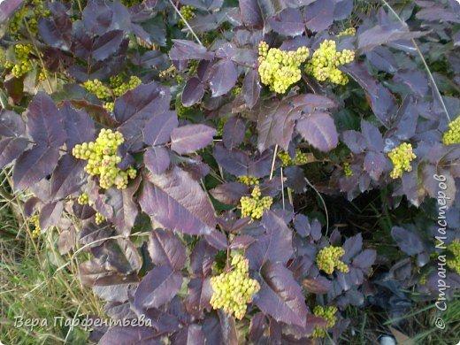 Весна,  Весна на улице! фото 19