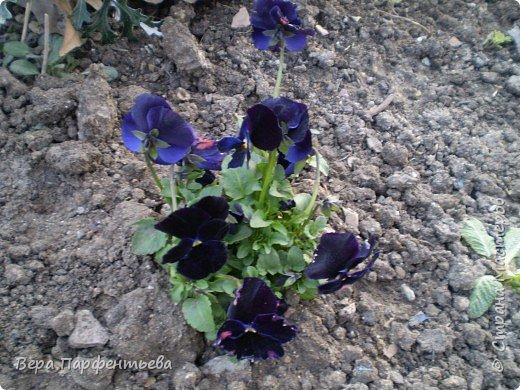 Весна,  Весна на улице! фото 13