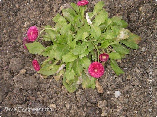 Весна,  Весна на улице! фото 14