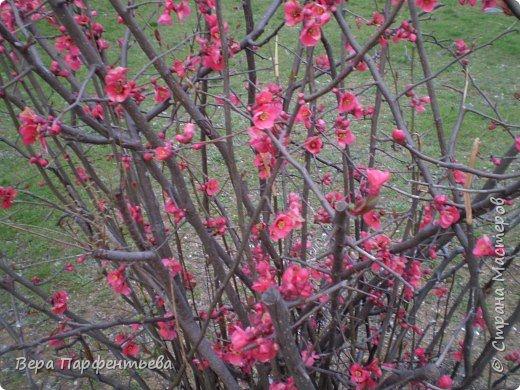 Весна,  Весна на улице! фото 17