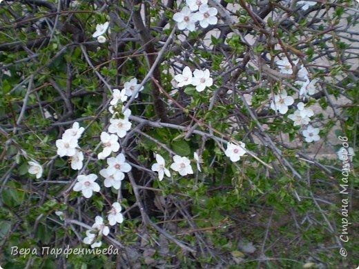 Весна,  Весна на улице! фото 18