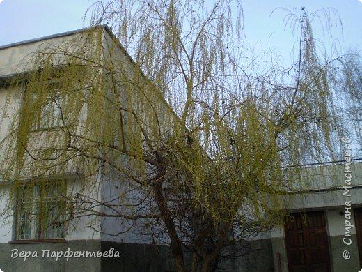 Весна,  Весна на улице! фото 16
