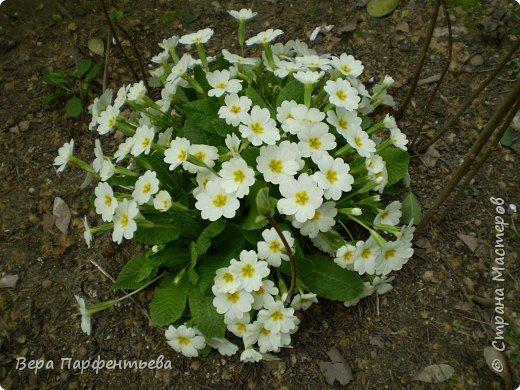 Весна,  Весна на улице! фото 21