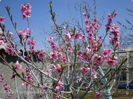 Персики фото 4