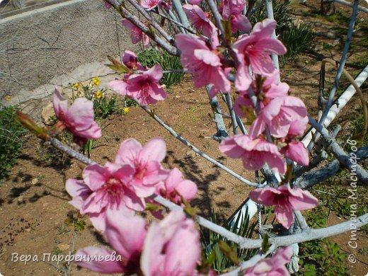 Персики фото 3