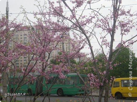 Цветущий город фото 1