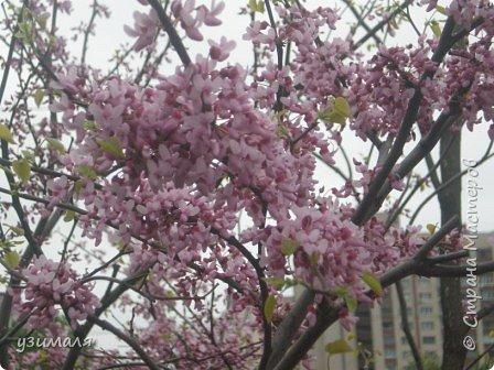 Цветущий город фото 2