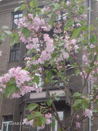 Цветущий город фото 5