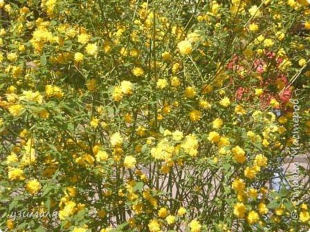 Буйное цветение фото 2