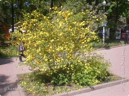 Буйное цветение фото 1