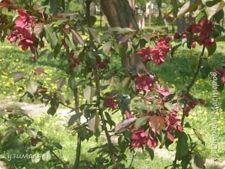 Буйное цветение фото 3