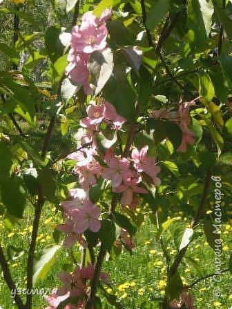 Буйное цветение фото 5
