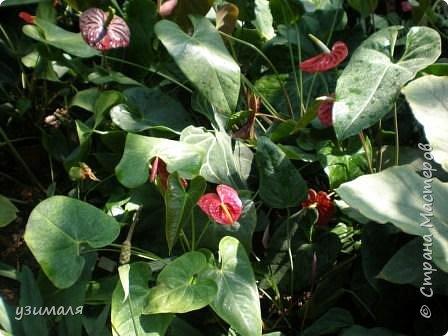 Тропические цветы фото 1