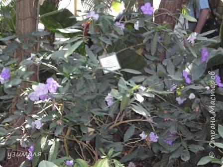 Тропические цветы фото 5