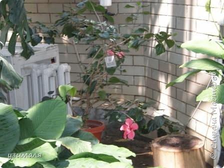Тропические цветы фото 6