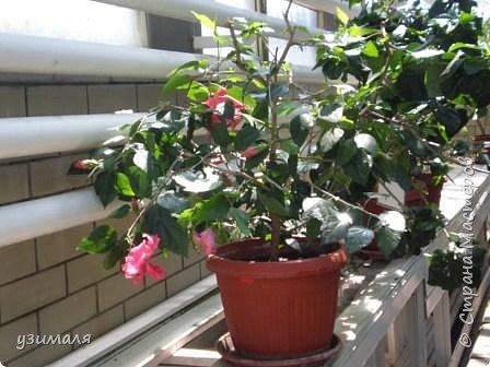 Тропические цветы фото 3