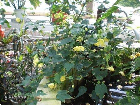 Тропические цветы фото 2