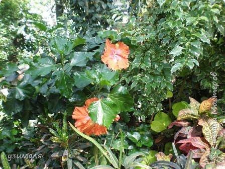 Тропические цветы фото 4