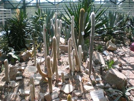 Растения пустыни фото 1