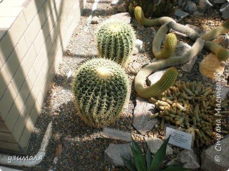 Растения пустыни фото 2